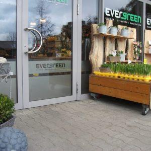 Evergreen3